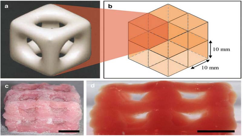 Researchers Use 3D Printing Cryogenics to Develop Biological Replicas for Tissue Regeneration