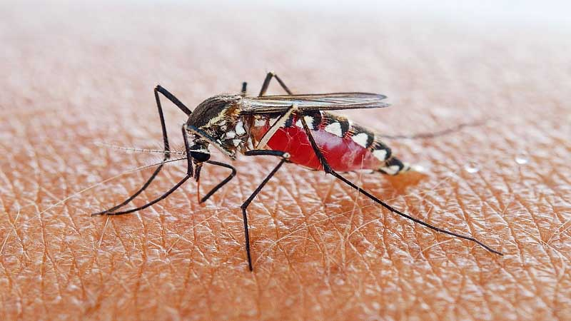 Researchers Study Malaria Through Inexpensive 3D Printed Membrane Feeder