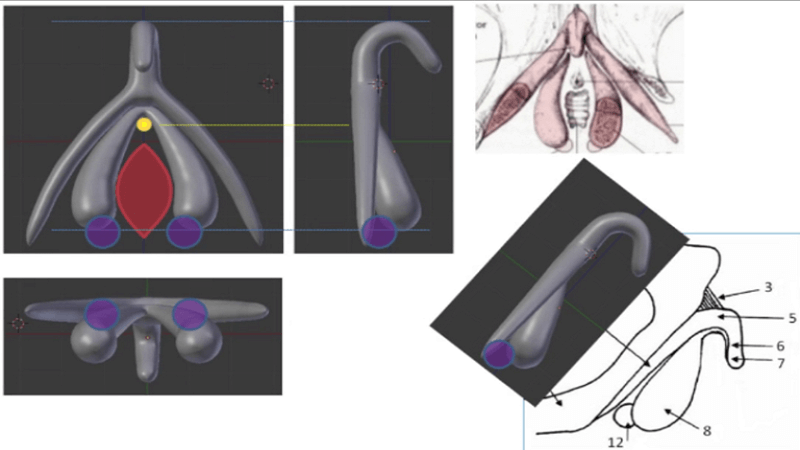 3D Printed Clitoris for Sex Education in France